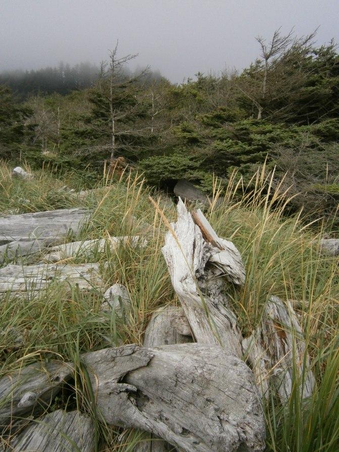 Olympic Peninsula, coastal forest