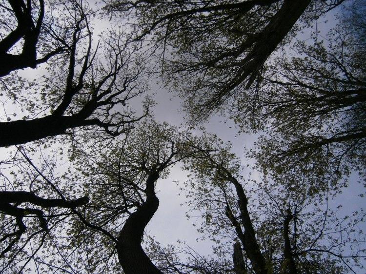 Spring trees in Carkeek Park