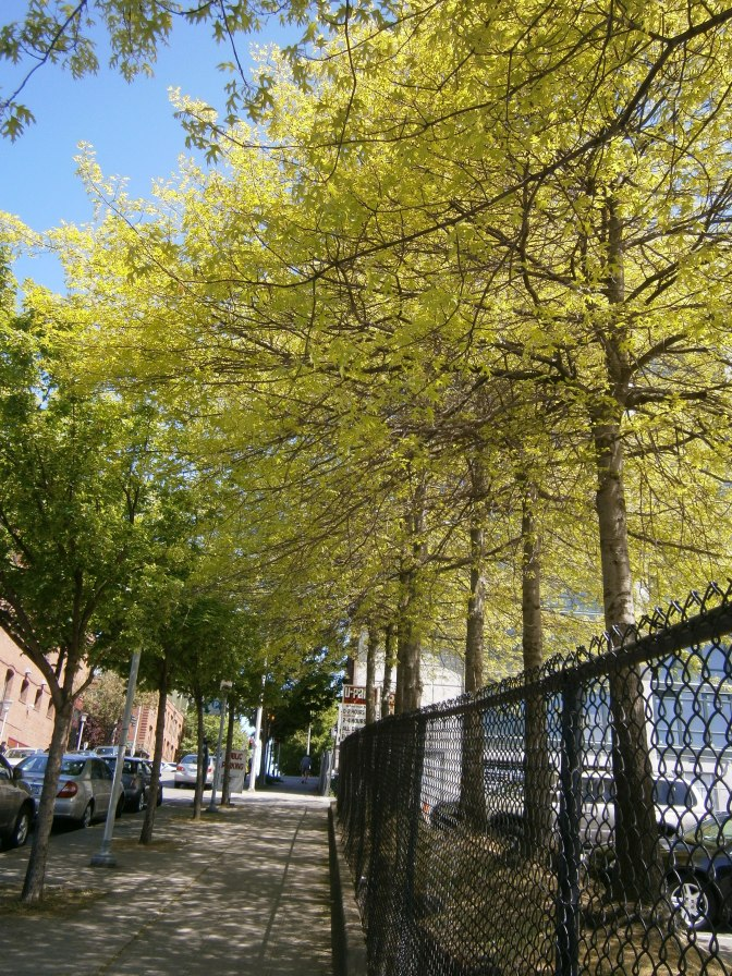 Belltown in springtime