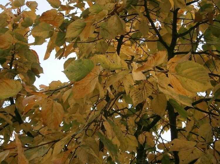 Bellevue Autumn