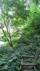 Laura's Woods