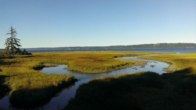 More Salt Marshes