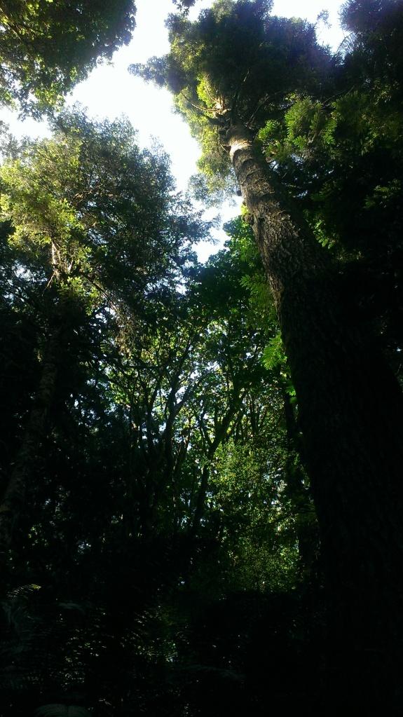 Forest Near the Dosewallips River Last Week