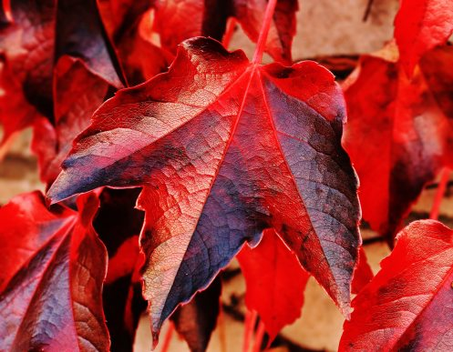 autumn-autumn-colours-autumn-leaves-blur-235732